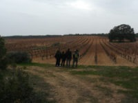 Birds and Wines Requena
